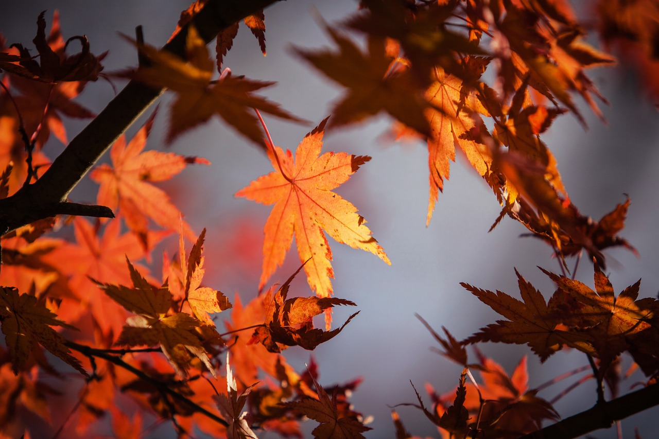 autumn-leave-1415541_1280